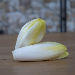 Endive Witloof Bio*